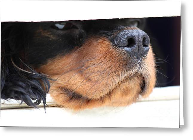 Guard Dog Greeting Cards - Dog waiting for postman Greeting Card by Simon Bratt Photography LRPS