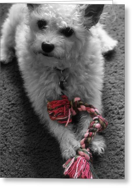 Best Friend Greeting Cards - Dog With Tug Toy Soft Focus Greeting Card by Sarah Broadmeadow-Thomas