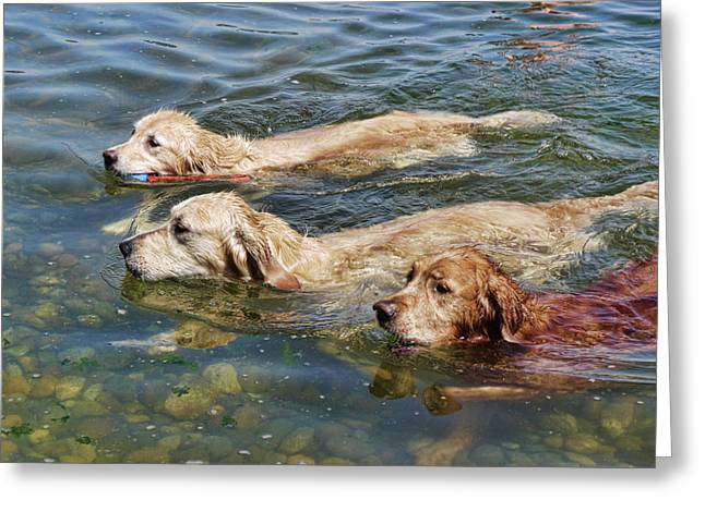 Swimming Dog Greeting Cards - Dogs Are People Too Greeting Card by Lawrence Christopher