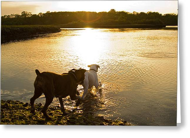 Boxer Greeting Cards - Dogs at Sunset Greeting Card by Stephanie McDowell