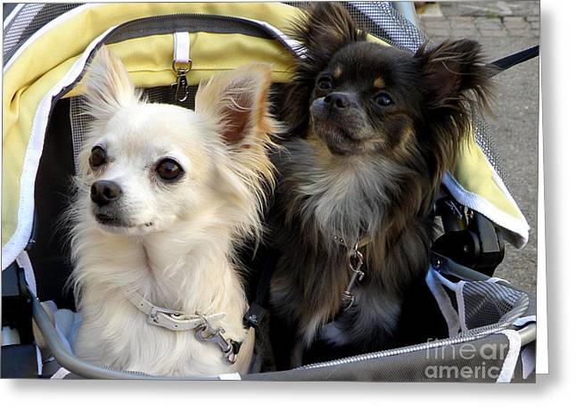 Lainie Wrightson Greeting Cards - Dogs in a Stroller Greeting Card by Lainie Wrightson