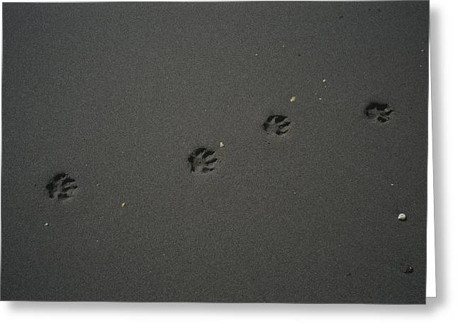 Animal Tracks Greeting Cards - Dogs Tracks Are Left On The Beach Greeting Card by Stephen Alvarez