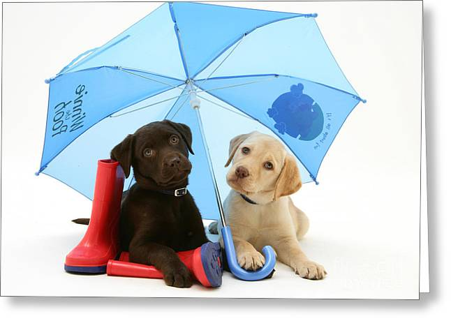 Wellingtons Greeting Cards - Dogs Under An Umbrella Greeting Card by Jane Burton