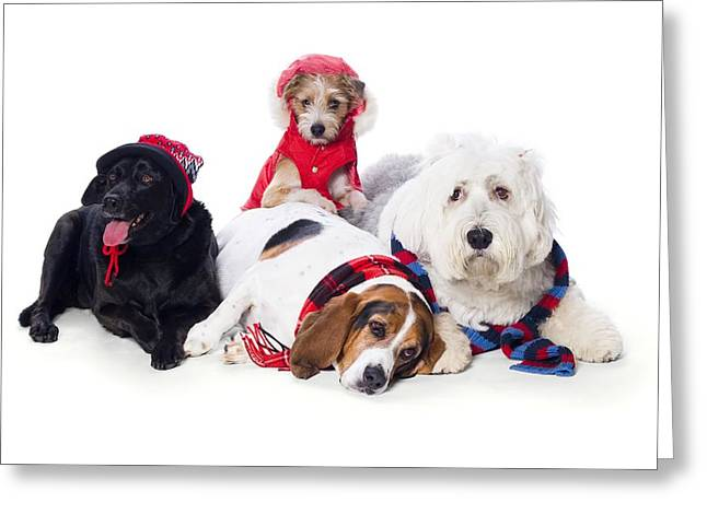 Apparel Greeting Cards - Dogs Wearing Winter Accessories Greeting Card by Corey Hochachka