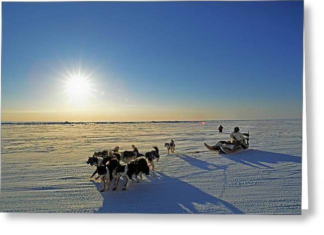 Dog In The Snow Greeting Cards - Dogsledding In Grise Fiord, Nunavut Greeting Card by Robert Postma