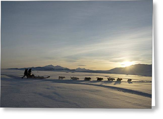Sled Dogs Greeting Cards - Dogsledge, Northern Greenland Greeting Card by Louise Murray