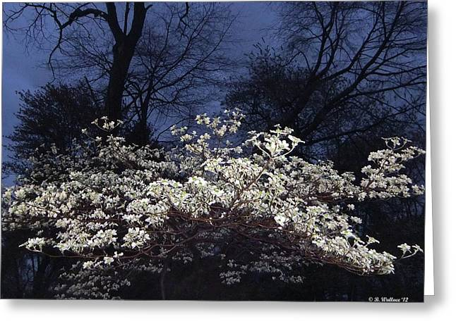Dogwood Silhouette Greeting Cards - Dogwood At Night Greeting Card by Brian Wallace