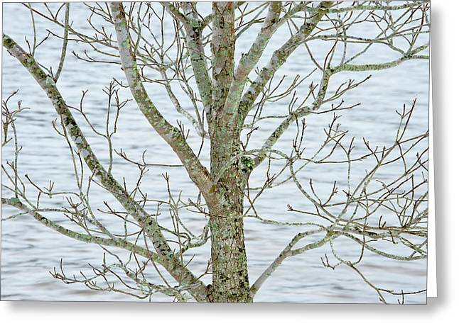 Dogwood Lake Greeting Cards - Dogwood Bark at the Lake Greeting Card by Greg  Plachta