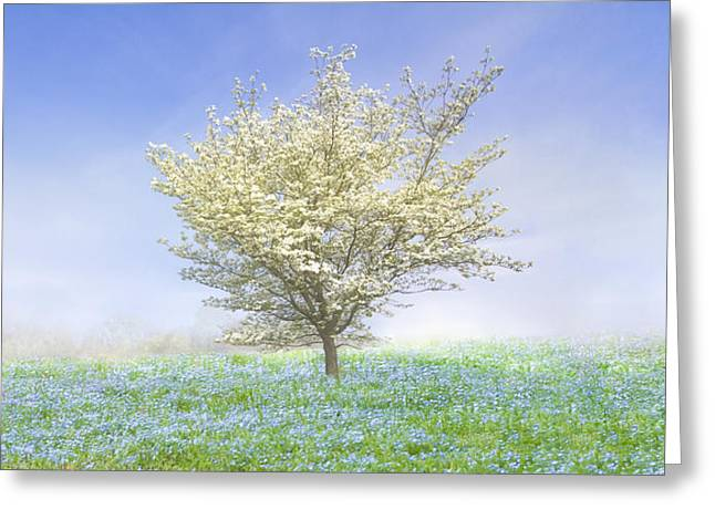 Tennessee Farm Greeting Cards - Dogwood in the Mist Greeting Card by Debra and Dave Vanderlaan