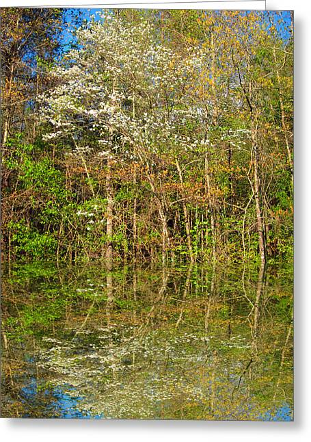 Dogwood Lake Greeting Cards - Dogwood Reflections Greeting Card by Barry Jones