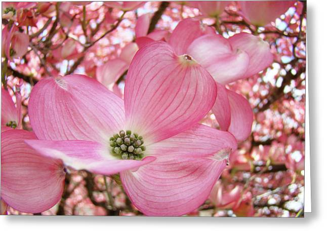 Baslee Troutman Greeting Cards - Dogwood Tree 1 Pink Dogwood Flowers Artwork Art Prints Canvas Framed Cards Greeting Card by Baslee Troutman Fine Art Collections