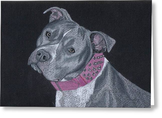 Bully Greeting Cards - Dolce Greeting Card by Stacey Jasmin
