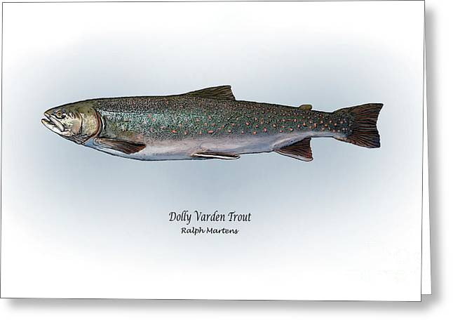 Trout Fishing Drawings Greeting Cards - Dolly Varden Trout Greeting Card by Ralph Martens