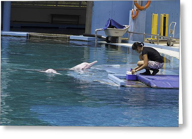 Water Greeting Cards - Dolphin and trainer at the Underwater World in Sentosa in Singap Greeting Card by Ashish Agarwal