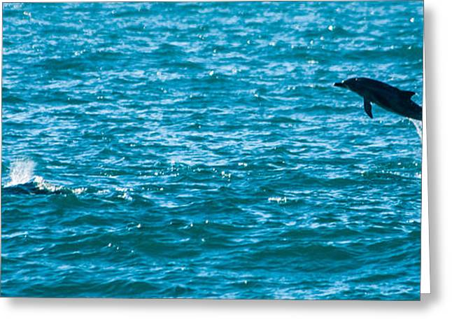 Ocean Mammals Greeting Cards - Dolphin dance Greeting Card by Alistair Lyne