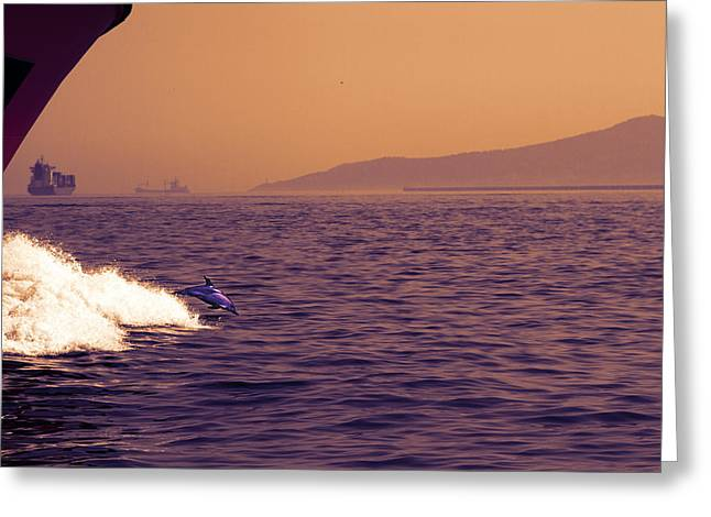 Dolphin Diving Greeting Card by Stephen McCluskey
