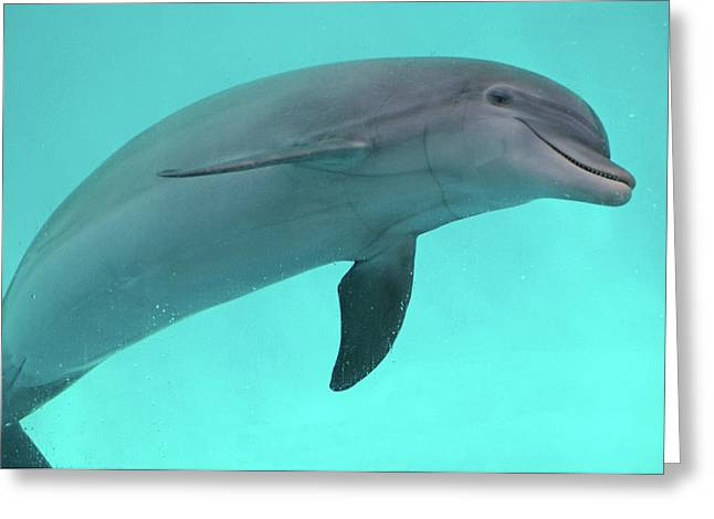 Panama City Beach Fl Greeting Cards - Dolphin Greeting Card by Sandy Keeton