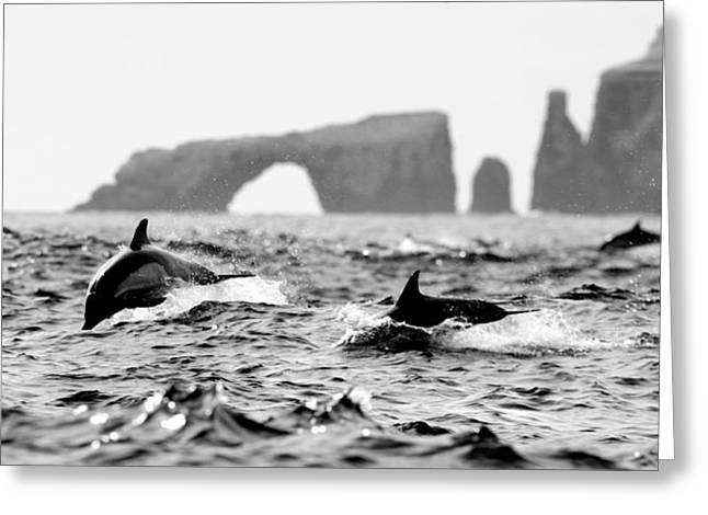 Ventura California Greeting Cards - Dolphins at Anacapa Arch Greeting Card by Steve Munch
