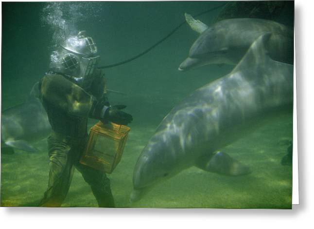 Dolphins Hover Near A Diver Holding An Greeting Card by Luis Marden