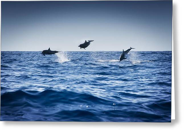 Delphinidae Greeting Cards - Dolphins Playing In The Ocean Greeting Card by Darren Greenwood