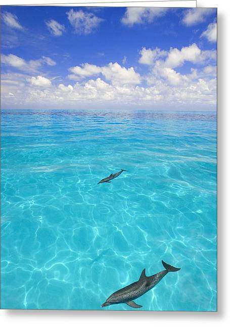 Delphinidae Greeting Cards - Dolphins Swimming Greeting Card by Carson Ganci