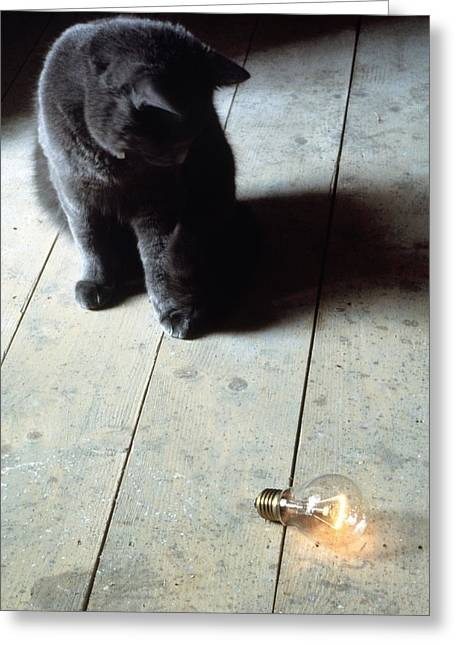 Felis Catus Greeting Cards - Domestic Cat And Light Bulb Greeting Card by Victor De Schwanberg