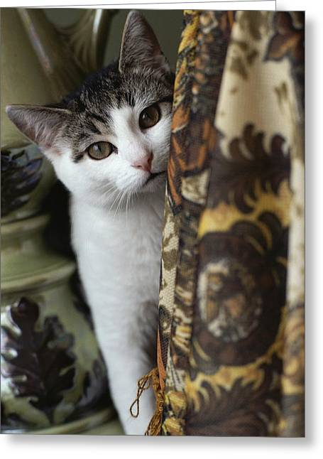 Indiana Photography Greeting Cards - Domestic Cat Greeting Card by Brian Gordon Green