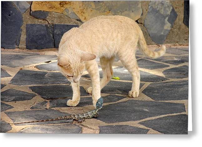 Felis Silvestris Catus Greeting Cards - Domestic Cat Playing With A Lizard Greeting Card by Bjorn Svensson