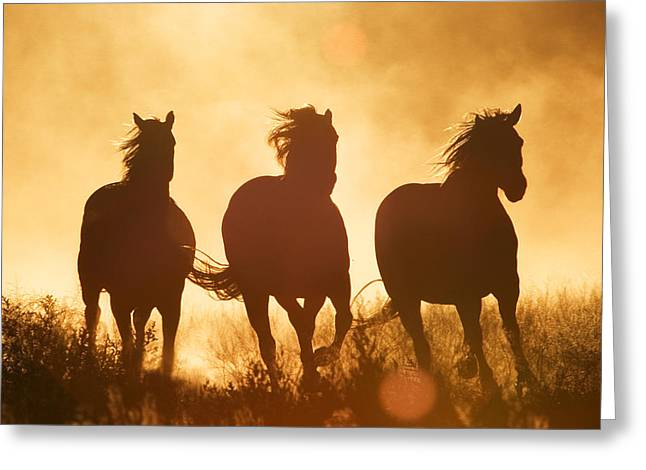 Silhouettes Of Horses Greeting Cards - Domestic Horse Equus Caballus Trio Greeting Card by Konrad Wothe