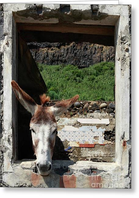 Absurd Greeting Cards - Donkey at the window Greeting Card by Gaspar Avila