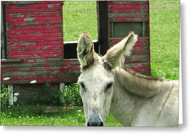 Donkey Greeting Card by Todd Sherlock