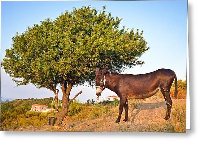 Tied-up Greeting Cards - Donkey Greeting Card by Tom Gowanlock