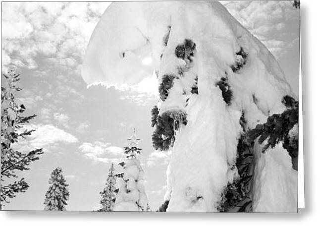 Snow Tree Prints Greeting Cards - Donner Trees Greeting Card by Isak Hanold