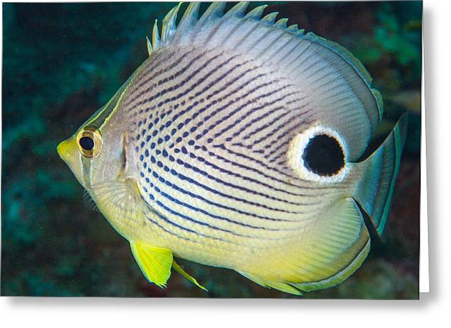 Belize Greeting Cards - Dont Eyeball Me Greeting Card by Jean Noren