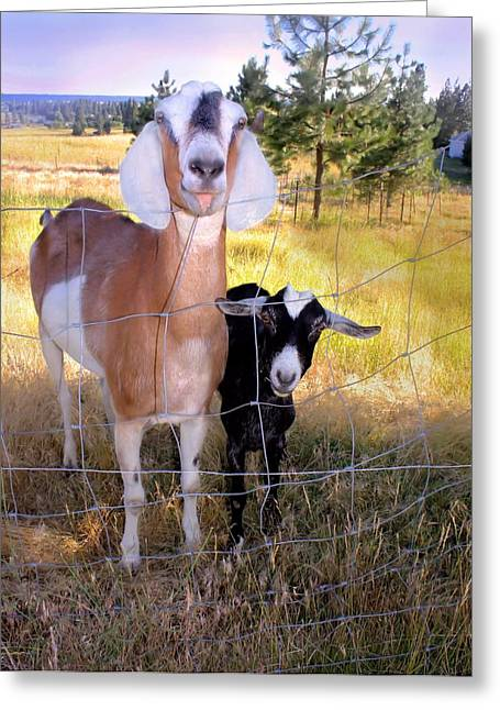 Scapegoat Greeting Cards - Dont Fence Me In Greeting Card by Myrna Migala