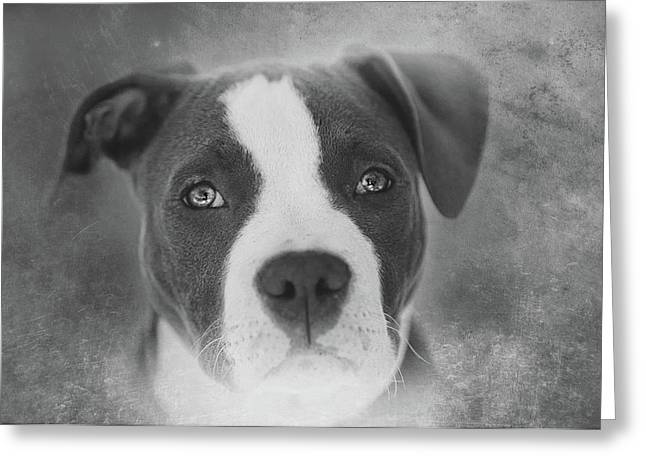 Don't Hate The Breed - Black And White Greeting Card by Larry Marshall