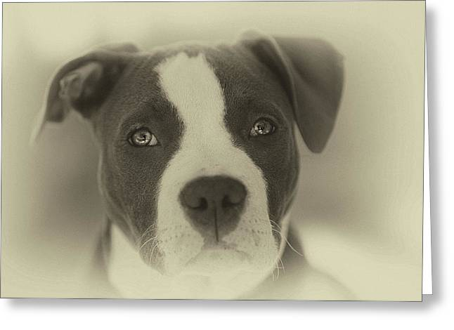 Don't Hate The Breed Greeting Card by Larry Marshall