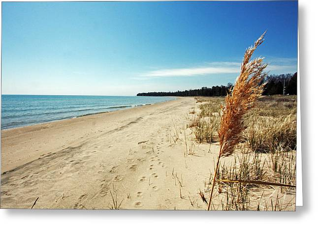 Door Photographs Greeting Cards - Door County Beach Greeting Card by Ty Helbach