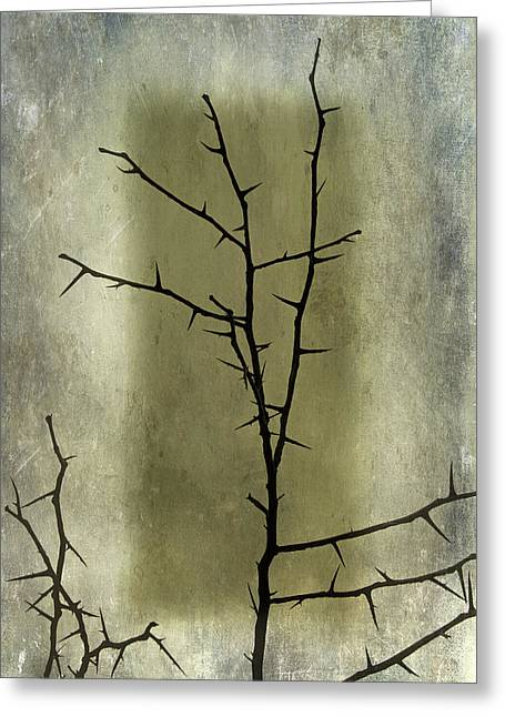 Steven Michael Photography And Art Greeting Cards - Dormant Greeting Card by Steven  Michael
