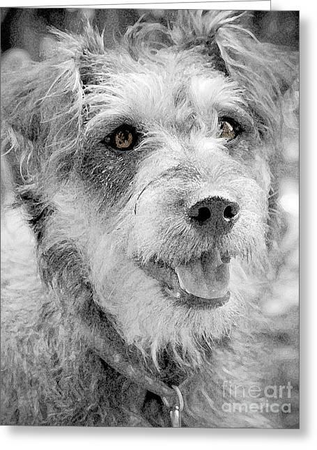 Puppies Photographs Greeting Cards - Dottie Brown Eyes 2 Greeting Card by Karen Lewis