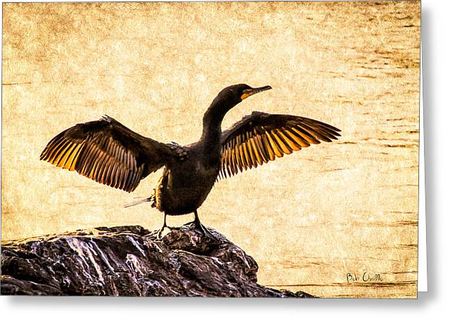 Contemporary Abstract Photographs Greeting Cards - Double-crested Cormorant Greeting Card by Bob Orsillo