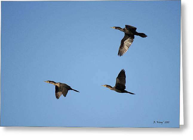 Secretive Birds Greeting Cards - Double-crested Cormorant in Flight Greeting Card by Roena King