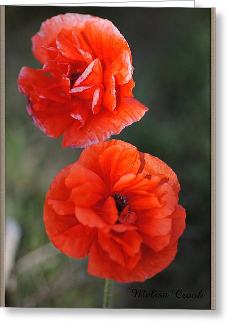 Mother Pyrography Greeting Cards - Double Poppy Greeting Card by Melisa Crook