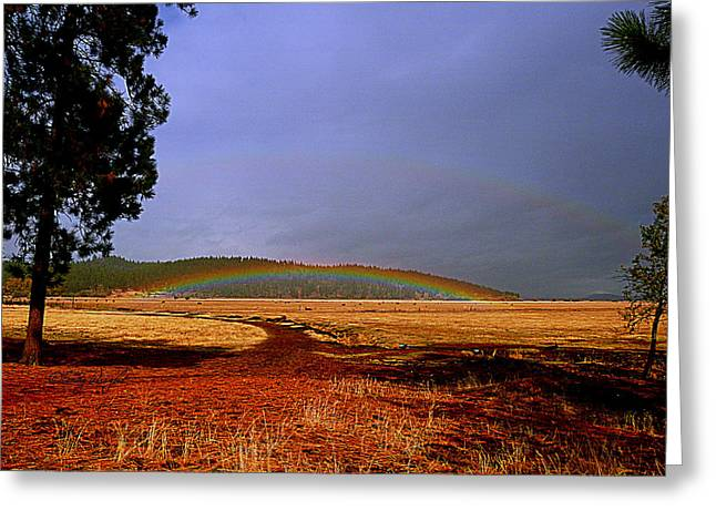 Pink Black Tree Rainbow Photographs Greeting Cards - Double Rainbow Ridge Greeting Card by Cindy Wright