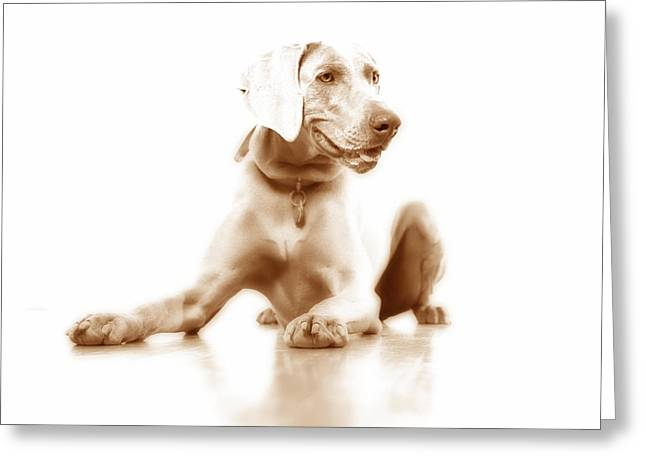 Lucky Dogs Greeting Cards - Down Greeting Card by Nancy Ingersoll