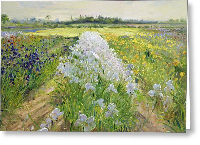 White Petals Greeting Cards - Down the Line Greeting Card by Timothy Easton