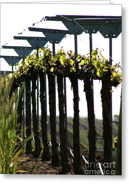 Winery Photography Greeting Cards - Down the Row Greeting Card by Brooke Roby