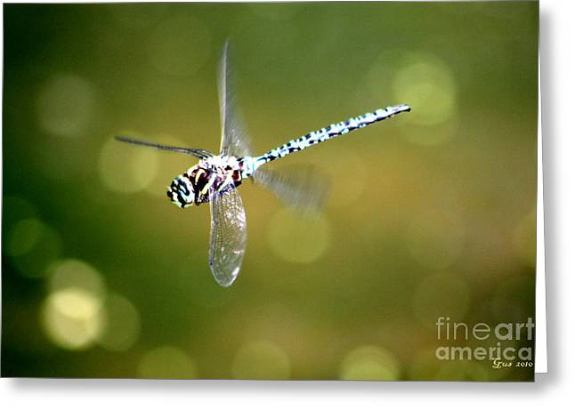 Dragon Flies Photographs Greeting Cards - Dragon fly in flight Greeting Card by Nick Gustafson