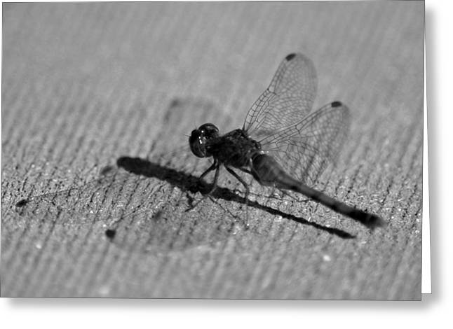 Nature Center Pond Greeting Cards - Dragon Fly Shadow Greeting Card by LeeAnn McLaneGoetz McLaneGoetzStudioLLCcom