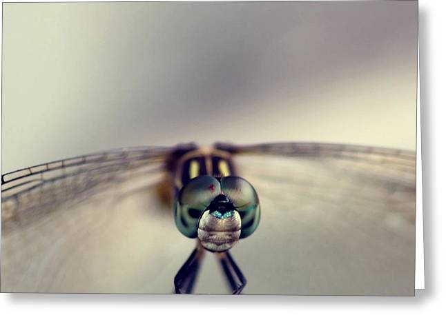 Dragonflies Greeting Cards - Dragonfly Art Greeting Card by Joel Olives